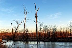 Chemetco - Contaminated wetlands at Long Lake