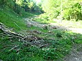 Coppicing East Bank Wood - geograph.org.uk - 1321668.jpg
