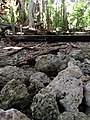 Coral Stone Found inside ruins - panoramio.jpg