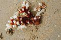 Coral on Kadavu (7499479998).jpg