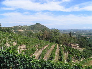 Asti wine - Vineyards in the Asti producing commune of Costigliole d'Asti.