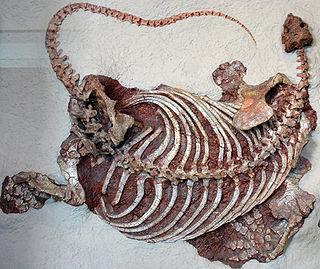 Caseasauria taxon of tetrapods