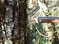 Couteau du Puy de Dôme 02.jpg