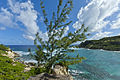 Cove Bay on East Coast Barbados.jpg