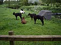 Cows near River Weaver - geograph.org.uk - 438224.jpg