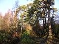 Craigmaddie Plantation - geograph.org.uk - 95122.jpg
