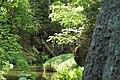 Creek through the green -1.jpg