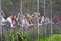 Crowds at lion enclosure - melbourne zoo.jpg