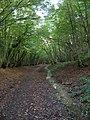 Cuckoo Trail, Cowden Wood - geograph.org.uk - 267735.jpg