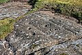 Cup-and-Ring-Marked Rock - geograph.org.uk - 1272845.jpg