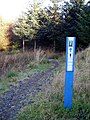 Cycle Trail in Newcastleton Forest - geograph.org.uk - 608716.jpg