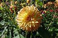 Dahlia @ Parc Floral @ Paris (30122052456).jpg