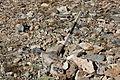 Dana Plateau Plot 088 (11878844633).jpg