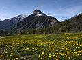 Dandelions and Monte Chétif.jpg