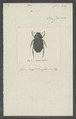 Dasyus - Print - Iconographia Zoologica - Special Collections University of Amsterdam - UBAINV0274 020 05 0002.tif