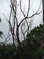 Dead Trees - panoramio (1).jpg