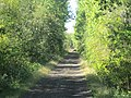 Deer on trail, Malagash, NS (44972228872).jpg