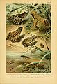 Deutschlands Amphibien und Reptilien (5982226970).jpg