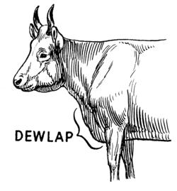 Dewlap (PSF).png
