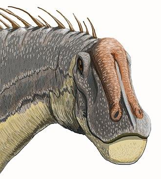 Dicraeosaurus - Restoration of the head