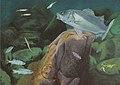 Dieta de la lubina, Dicentrarchus labrax, en la fase marina de su ciclo biológico sin texto.jpg