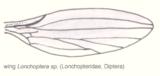 Dip-longopteridae-wing.png