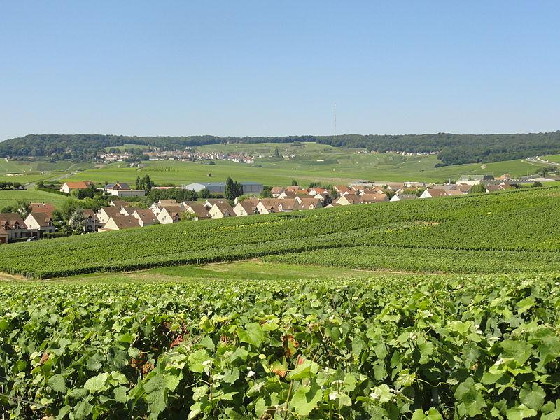 Le lotissement de la Terre du Crayon à Dizy (Marne), au milieu des vignes, avec au fond Hautvillers (Marne) sur la Montagne de Reims