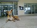 Dog taking rest infront of Library.jpg