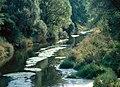 Donau-06-Auenwald-2003-gje.jpg