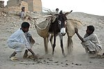 Donkey carrying Rahal basket.jpg