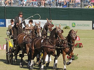 2010 FEI World Equestrian Games - Combined driving at the 2010 World Equestrian Games