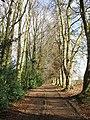 Driveway - geograph.org.uk - 322095.jpg