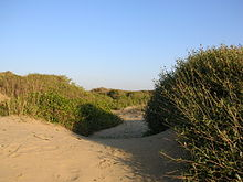 Sand dunes at a beach, surrounded by rough scrub