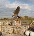 Eagle sculpture and building materials - geograph.org.uk - 82982.jpg