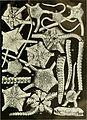 Echinodermata Ophiuroidea (1922) (21111525276).jpg
