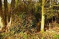 Edge of Doles Wood - geograph.org.uk - 1067446.jpg