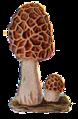 Edible Fungi 12.png