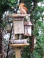 Eichhörnchen 1.jpg
