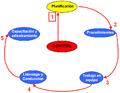 El camino de lo que necesita la organización.png