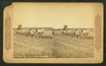 Emigrating across the plains of America, by Continent Stereoscopic Company.png
