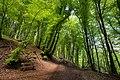Enlightened forest.jpg