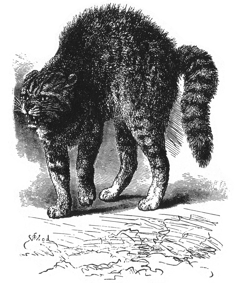 """Ilustración  de """"La expresión de las emociones en el hombre y los animales"""" de Charles Darwin"""