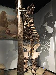 FMNH Megatherium.jpg