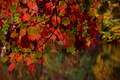 Fall-red-tree-lake - West Virginia - ForestWander.png