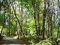 Fall Colors at Rood Bridge Park (268806231).jpg