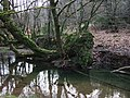 Fallen tree in River Burn - geograph.org.uk - 325822.jpg