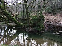 Fallen tree in River Burn - geograph.org.uk - 325822.jpg