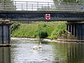 Family of swans going up the no entry^ June 2013 - panoramio.jpg