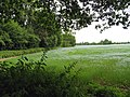 Farmland near Burghfield - geograph.org.uk - 22989.jpg