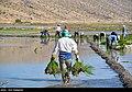 Fars Province 2020 (13).jpg